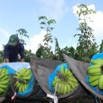 Làm gì để thúc đẩy doanh nghiệp đầu tư vào nông nghiệp?