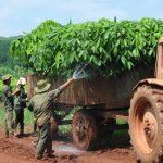 Sổ tay Hướng dẫn quản lý rừng cao su bền vững