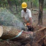 Chế biến gỗ và lâm sản xuất khẩu: Cần đổi mới và đột phá