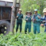 Hiệu quả từ thay đổi phương thức sản xuất cây giống ở Cao su Dầu Tiếng