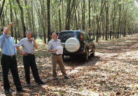 Ảnh 1: Phó TGĐ Nguyễn Tiến Đức (giữa) kiểm tra tình hình bệnh rụng lá mùa mưa tại vườn cây Công ty Chư Păh.