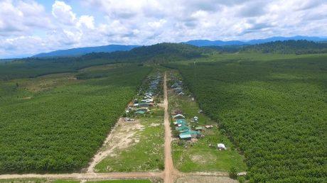 CĐ CSVN sẽ triển khai xây dựng làng công nhân cao su tại Công ty TNHH MTV Cao su Chư Mom Ray và Công ty CPCS Sa Thầy, tỉnh Kon Tum. Ảnh: Ng. Cường.