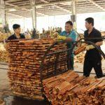 Cơ hội để gỗ cao su cất cánh