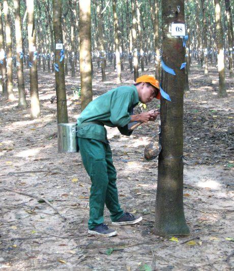 Nguyễn Xuân Quyết trên vườn cây...