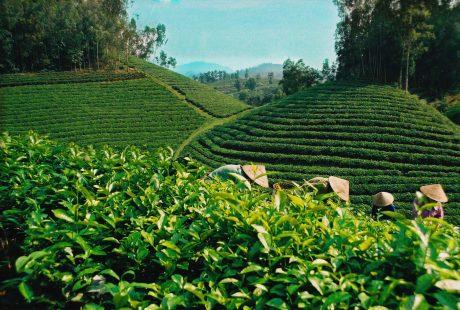 Việc ban hành Luật Trồng trọt là cần thiết nhằm tạo bước phát triển bền vững cho ngành nông nghiệp.