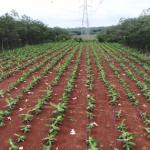 VRG cam kết phát triển bền vững