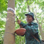 Khối thi đua tại Lào: Dự kiến khai thác vượt 12,3%