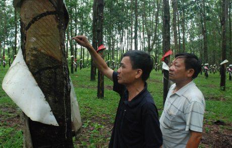 Ông Trần Văn Phong – Trưởng phòng kỹ thuật công ty và ông Bùi Gia Đạo – GĐ NT Dục Nông (bìa phải) kiểm tra kỹ thuật vườn cây