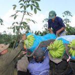 Cao su Dầu Tiếng: Phát triển nông nghiệp công nghệ cao