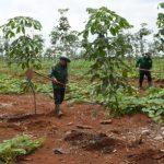 Nhiều giải pháp nổi bật trong quản lý nông nghiệp