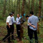 Điều chỉnh giảm kế hoạch sản lượng năm 2018 cho Cao su Quảng Nam