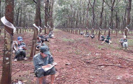 Thí sinh Công ty CPCS Đồng Nai – Kratie tranh thủ ôn luyện lý thuyết ngay tại vườn cây. Ảnh: CTV