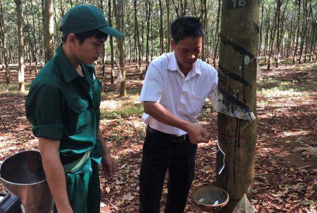Anh Hà Thành Chung hướng dẫn công nhân kỹ thuật khai thác.