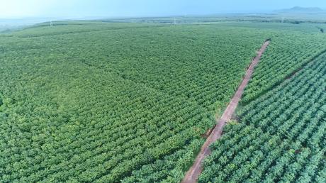 VRG phấn đấu năm 2019 có doanh nghiệp được chứng nhận phát triển bền vững.