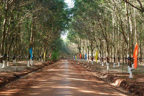 Vườn cây đẹp của NT được công ty chọn tổ chức Hội thi BTV 2018
