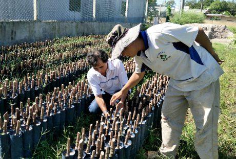 Kiểm tra chất lượng cây giống