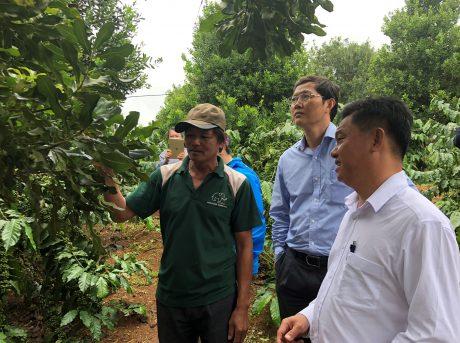 Các đại biểu tham quan mô hình trồng mắc ca xen trong vườn cà phê tại Lâm Đồng.