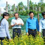 Vườn rau sạch gia đình ở công đoàn cao su Chư Prông