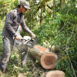 Gỗ MDF VRG Kiên Giang: Đảm bảo nguồn nguyên liệu ổn định