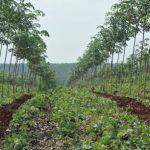 Hành động vì sự phát triển bền vững ngành cao su Việt Nam