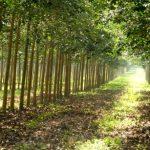 Đầu tư an sinh xã hội gắn với bảo vệ môi trường, SXKD ngày càng hiệu quả