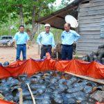 Ổn định lao động mùa cạo mới