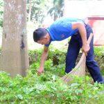 Đoàn Thanh niên Cao su Phú Riềng: Sôi nổi các hoạt động tình nguyện