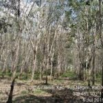 Bùng phát bệnh rụng lá Pestalotiopsis tại Indonesia