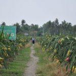 Tập đoàn Quế Lâm sẽ hỗ trợ công nhân cao su làm nông nghiệp hữu cơ