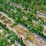 """Tác phẩm """"Thu hoạch trên vườn cây xen canh"""" của tác giả Bùi Việt Hưng đạt giải Nhất Cuộc ..."""