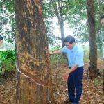 Đi tìm vườn cây di tích cho Tây Nguyên