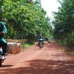 Cao su Krông Buk – Ratanakiri: Hoàn thành kế hoạch sớm 35 ngày