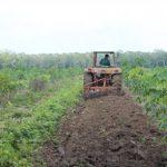 Nông trường Bến Củi, Công ty CPCS Tây Ninh: Nâng cao hiệu quả sản xuất nhờ cơ giới hóa