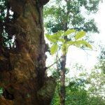 Một đời cây