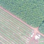 Rừng cao su: Từ góc nhìn quản lý phát triển bền vững
