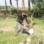 Kiến nghị gỗ cao su là sản phẩm thứ hai sau mủ