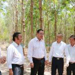 Cao su tại Campuchia: Chứng minh hiệu quả kinh tế bước đầu