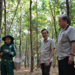 Cao su Việt Lào: Mô hình kiểu mẫu tại nước ngoài của VRG
