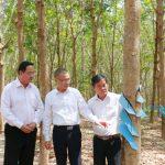 Cao su Bà Rịa Kampong Thom: Điển hình vượt khó