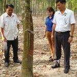NT Lai Uyên: 16 năm liền đạt năng suất 2 tấn/ha
