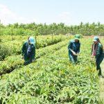 Khung pháp lý để hỗ trợ và thúc đẩy sản xuất phát triển bền vững