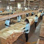 Phát triển bền vững ngành gỗ sau đại dịch Covid-19