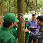 Cao su Phú Riềng điển hình trong phong trào luyện tay nghề - thi thợ giỏi