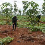 Cần đẩy mạnh tập huấn quản lý rừng bền vững cho người lao động