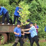 Trồng cây Vì một Việt Nam xanh
