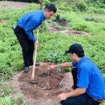 Đoàn thanh niên Cao su Lộc Ninh ra quân trồng 4.500 cây xanh