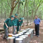 Nỗ lực đưa nông trường phát triển bền vững