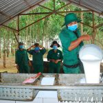 Ngành cao su tăng cường phòng chống dịch bệnh Covid-19