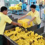Tháng 8, kim ngạch xuất khẩu cao su tăng hơn 21%