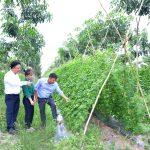 Nông trường Tân Hiệp, Cao su Tân Biên: Nhiều năm liền năng suất trên 2 tấn/ha